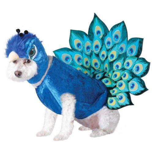 Peacock Costume - Pet