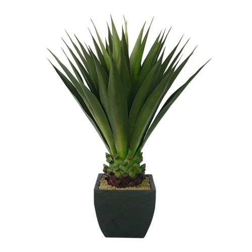 Laura Ashley Silk Aloe Plant
