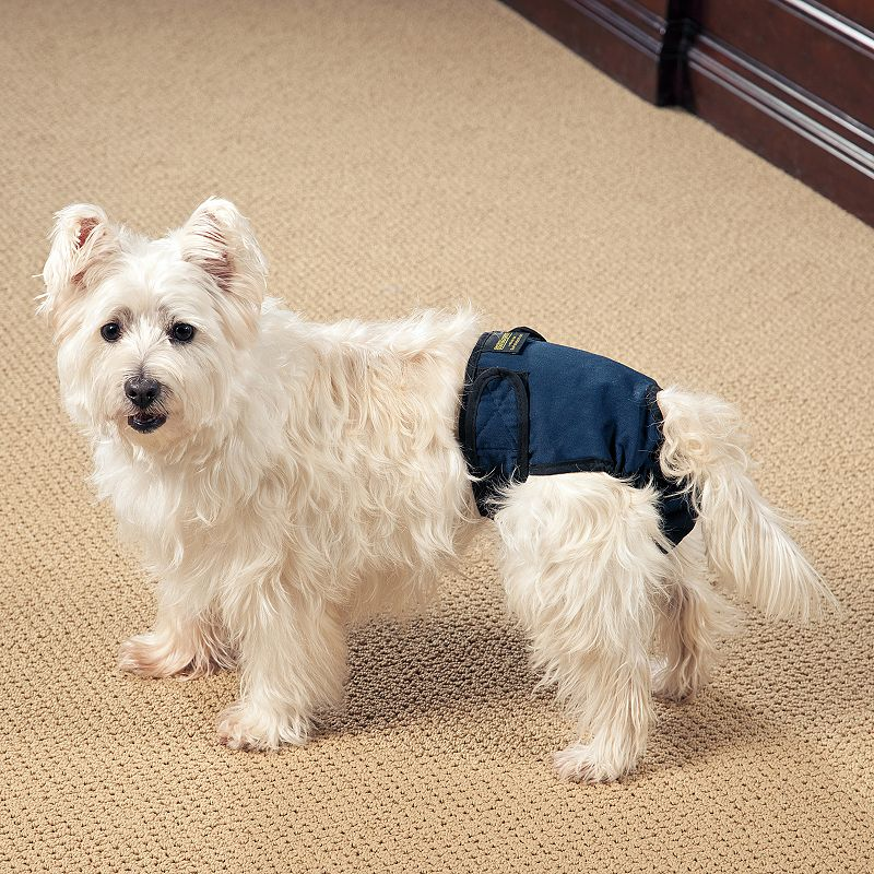 Doctors Foster and Smith Toy Female Pet Bloomers