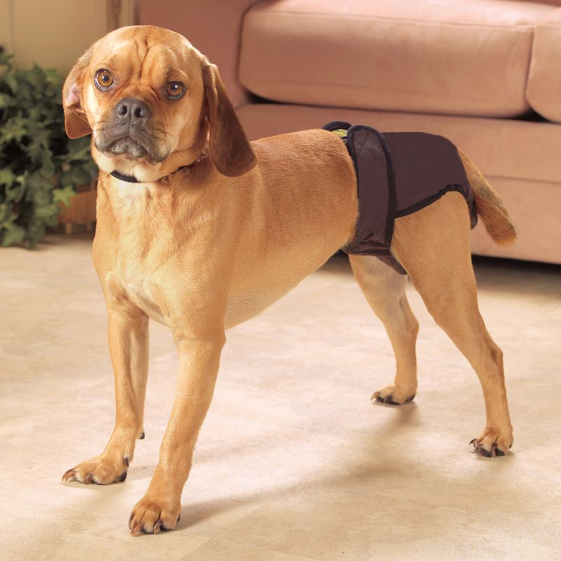 Doctors Foster and Smith Extra-Large Female Pet Bloomers