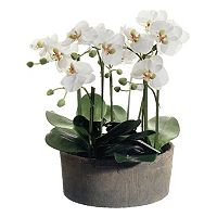 19-in. Artificial Phalaenopsis Plant