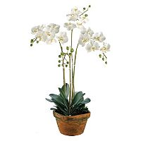36-in. Artificial Phalaenopsis Plant