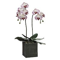 28-in. Artificial Phalaenopsis Plant