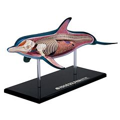 John N. Hansen Co. 4D Dolphin Anatomy Model by