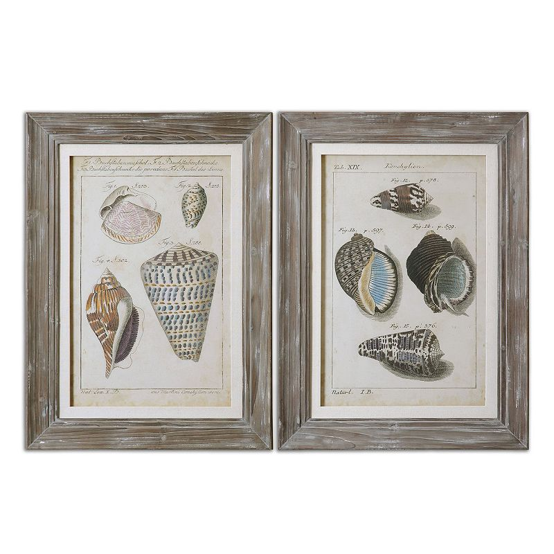 Vintage Shell Study Framed Wall Art 2 Piece Set