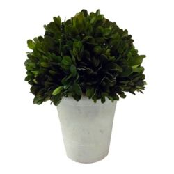 Click here to buy SONOMA Goods for Life Artificial Boxwood Plant.