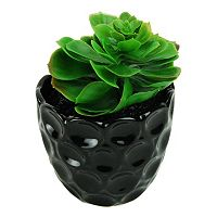 Designs by Lauren Artificial Succulent Plant
