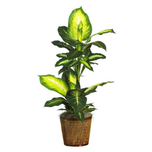 nearly natural Silk Golden Dieffenbachia Plant