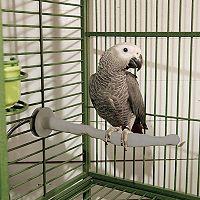 K&H Pet Thermo-Perch Heated Bird Perch