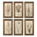 6-pc. Wheat Grass Framed Wall Art Set