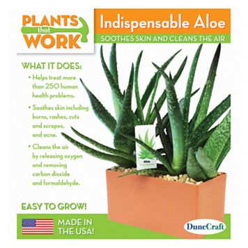 Plants that Work Indispensable Aloe Plant Cube Kit