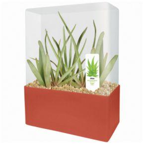 Plants that Work Indispensable Aloe Plant Cube Kit