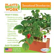 Plants that Work Sensational Strawberries Plant Cube Kit