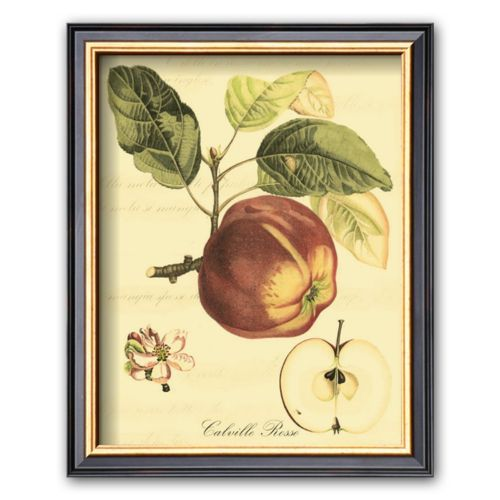 Art.com Petite Tuscan Fruits I Framed Art Print