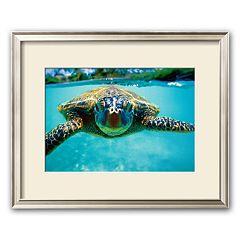 Art.com 'Honu, Turtle' Framed Art Print by Kirk Lee Aeder