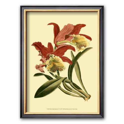 Art.com Orchid Splendor IV Framed Art Print
