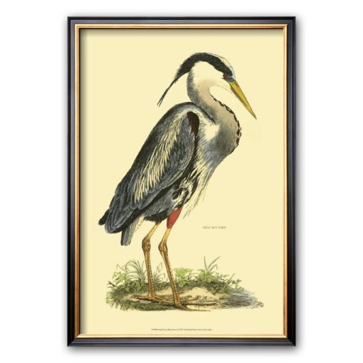 Art.com Great Blue Heron Framed Art Print by Prideaux John Selby