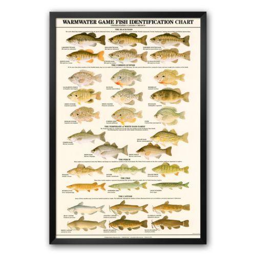 Art.com Warmwater Gamefish of North America Framed Art Print