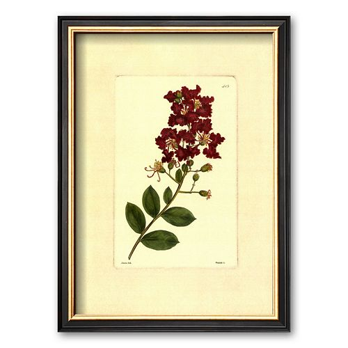Art.com Red Curtis Botanical II Framed Art Print