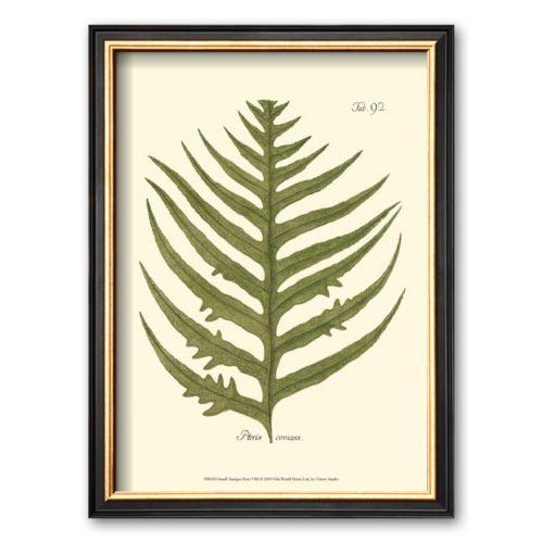 Art.com Small Antique Fern VIII Framed Art Print by Denis Diderot