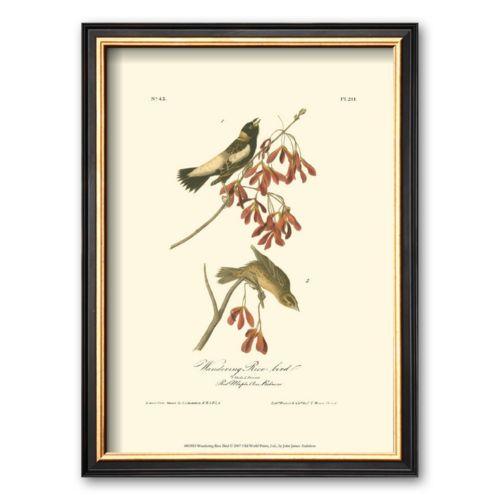 Art.com Wandering Rice Bird Framed Art Print by John James Audubon