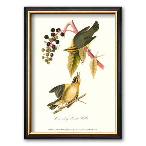 Art.com Warbler Framed Art Print by John James Audubon