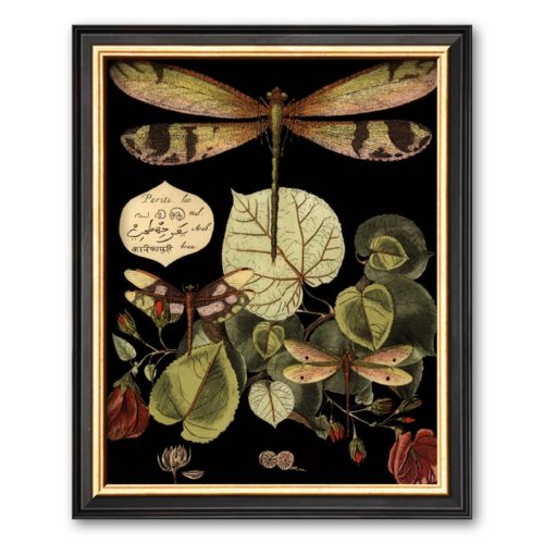 Art.com Whimsical Dragonfly on Black II Framed Art Print