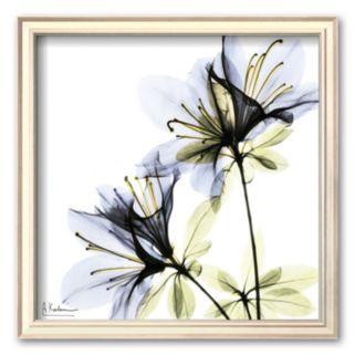 Art.com Blue Twin Azalea in Bloom Framed Art Print by Albert Koetsier