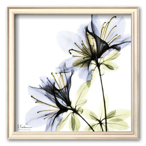 Art.com Blue Twin Azalea in Bloom Framed Art Print by Albert Koetsier