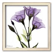 Art.com Gentian in Purple Framed Art Print by Albert Koetsier