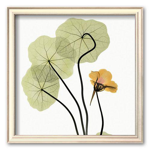 "Art.com ""Nasturtium"" Framed Art Print by Albert Koetsier"