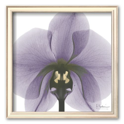 Art.com Precious Orchid in Purple Framed Art Print by Albert Koetsier