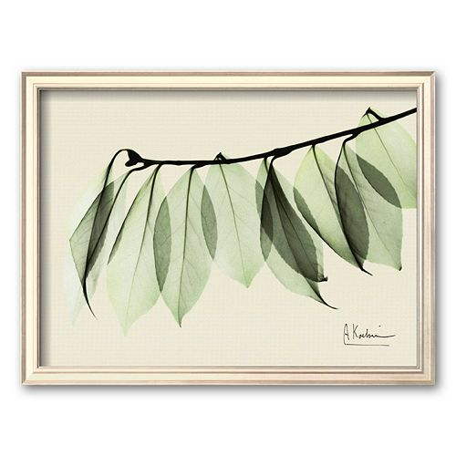 Art.Com Sage Eucalyptus Leaves I Framed Art Print By Albert Koetsier