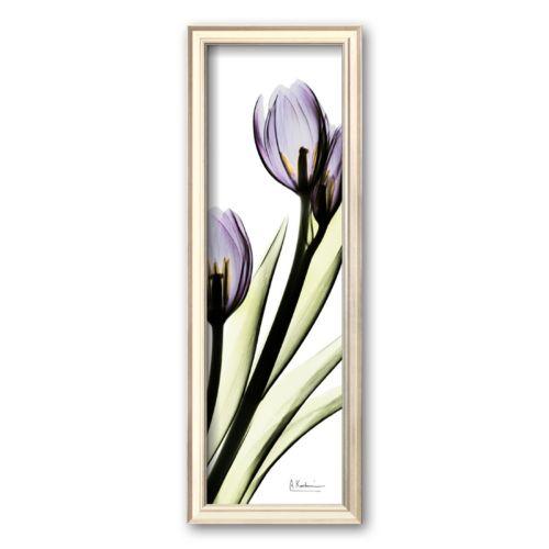 Art.com Tulip in Purple Framed Art Print by Albert Koetsier