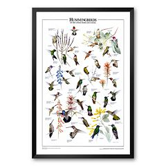 Art.com 'Hummingbirds of US & Canada' Framed Art Print