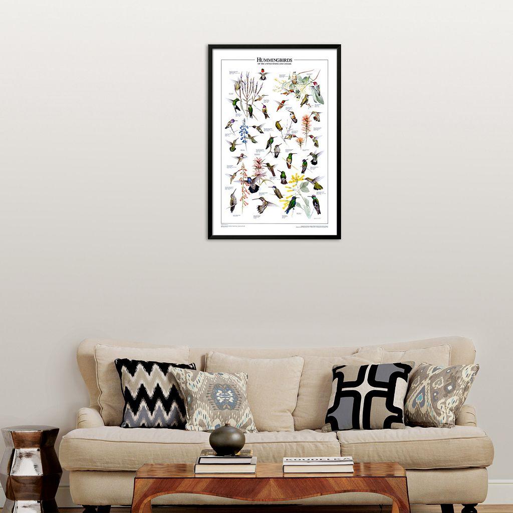 Art.com Hummingbirds of US & Canada Framed Art Print