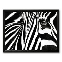 Art.com 'Black and White II (Zebra)' Framed Art Print By Rocco Sette