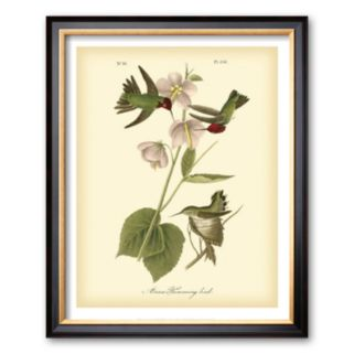 Art.com Anna Hummingbird Framed Art Print by John James Audubon