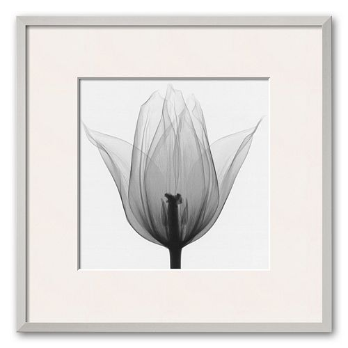 Art.com Triumph Tulip Framed Art Print by Steven N. Meyers