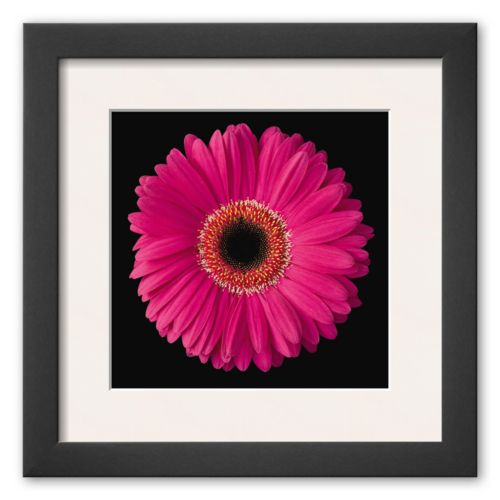 Art.com Gerbera Daisy Pink Framed Art Print By Jim Christensen