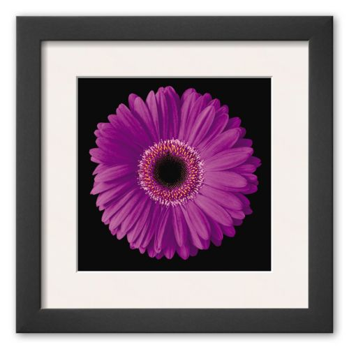 Art.com Gerbera Daisy Purple Framed Art Print By Jim Christensen