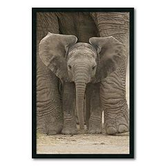 ''Big Ears - Baby Elephant'' Framed Wall Art