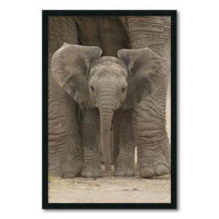 Big Ears - Baby Elephant Framed Wall Art