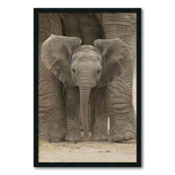 Big Ears - Baby Elephant Framed Wall Art