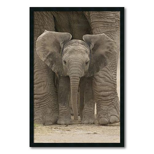 ''Big Ears - Baby Elephant'' Framed Wall Art