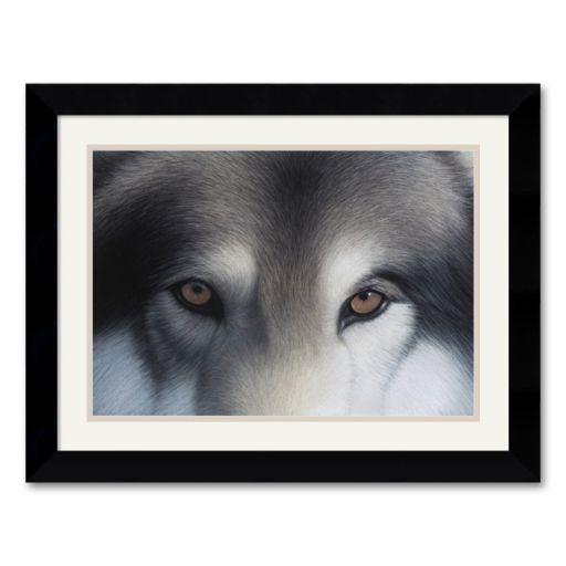 Eyes of the Hunter: Gray Wolf Framed Art Print by Charles Alexander