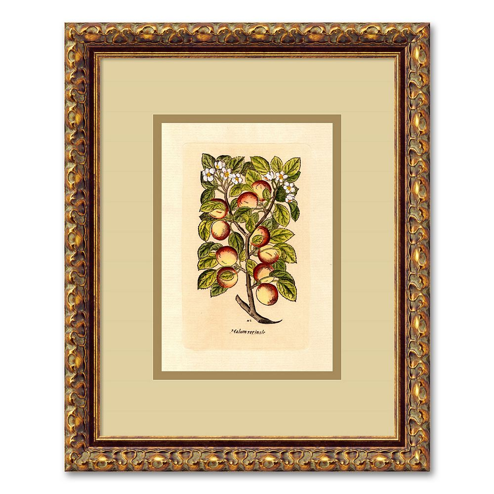 ''Apple (Malum Reginale)'' Framed Wall Art