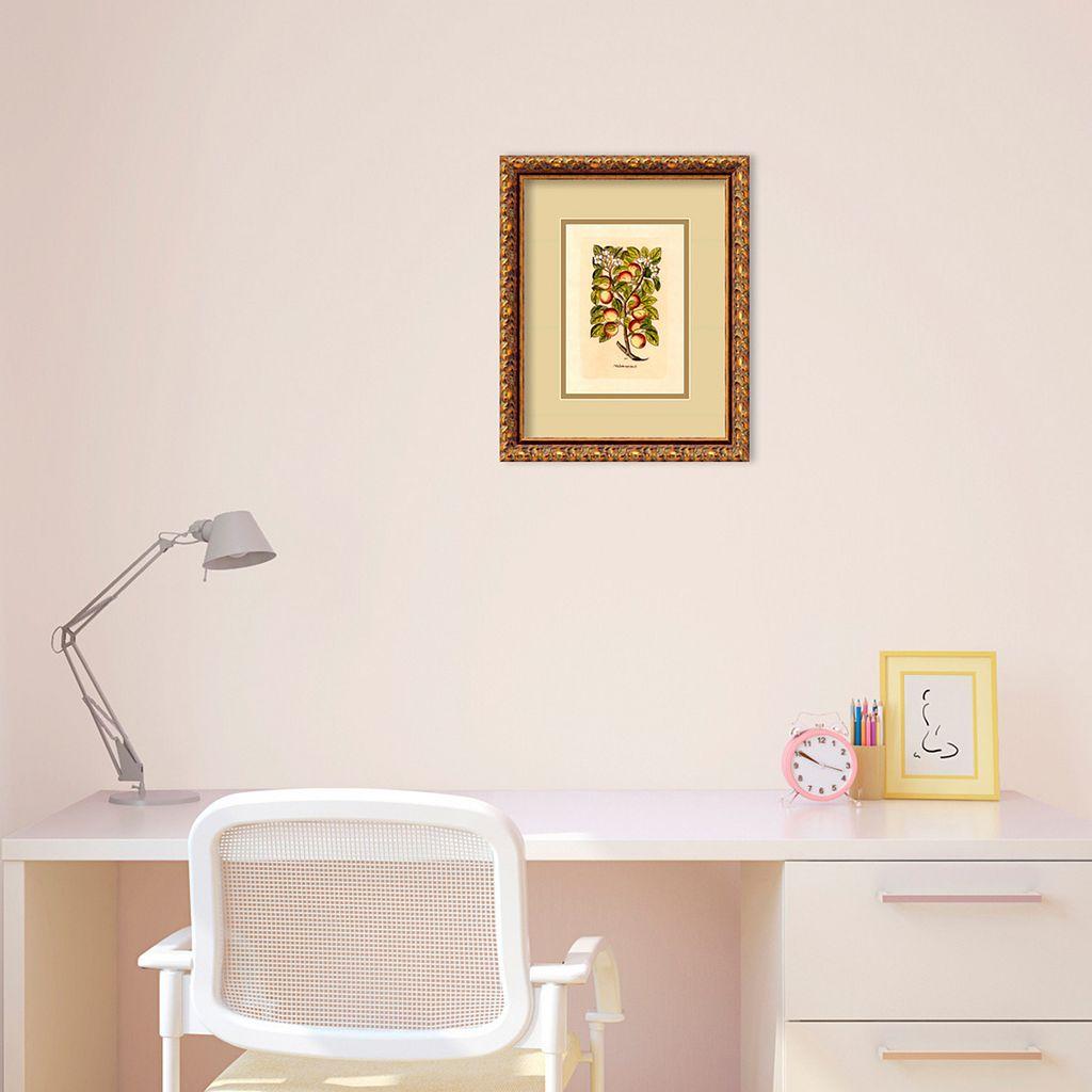 Apple (Malum Reginale) Framed Wall Art