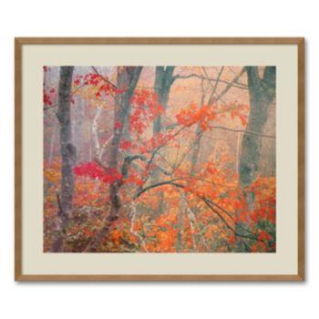 Maple Trees in Fog Near Eagle Lake, Acadia National Park, Maine, 1990 Framed Wall Art by William Neill