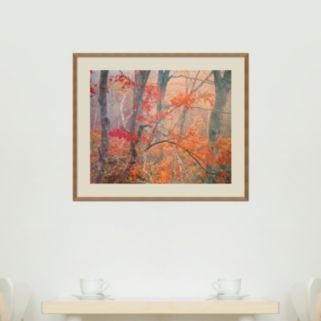 Maple Trees in Fog Near Eagle Lake, Acadia National Park, Maine, 1990 Framed Wall Art by William Neill